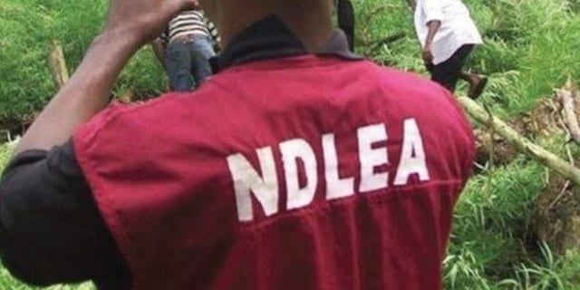No hiding place for drugs barons, abusers in Sokoto – NDLEA