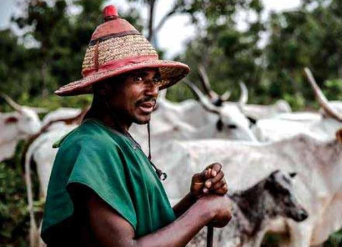 Re: Fulani are not the problem of Nigeria: An Igbo woman's perspective